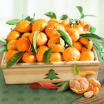 Mandarin Orange Christmas Crate
