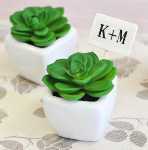 Mini Potted Succulents image