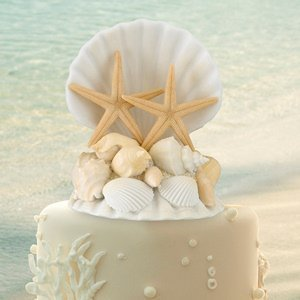 Coastal Sea Shell Cake Top image