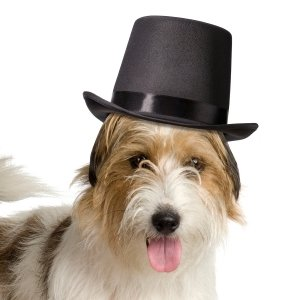 Top Hat for Dogs image